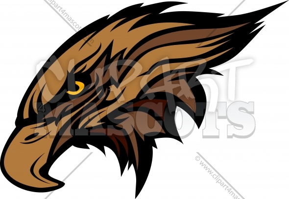 Mascot Head of an Falcon or Hawk Vector Illustration